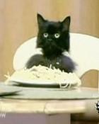 spaghetti-cat.jpg