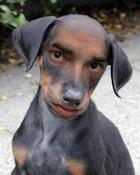 man-dog.jpg
