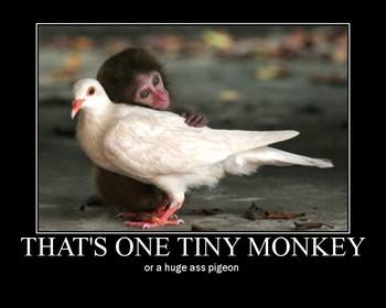 Free Tiny Ass Monkey (Huge Ass Pigeon) phone wallpaper by davincibello