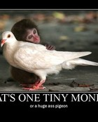 Tiny Ass Monkey (Huge Ass Pigeon)