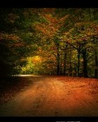 fall road.jpg wallpaper 1