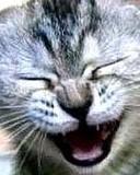 Free funnycat.jpg phone wallpaper by hotpinkblood