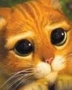 shrek-cat.jpg wallpaper 1