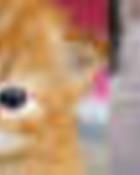 kittens wallpaper 1