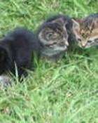 kittens8.jpg