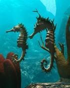Sea Horses wallpaper 1