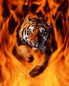 2400-1337~Bengal-Tiger-Jumping-Flames-Posters.jpg