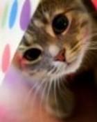 Cute Kitty wallpaper 1