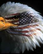 eagle_american_flag.jpg