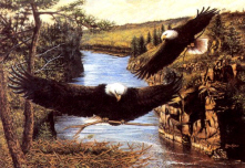 Free eagle.jpg phone wallpaper by katcw2005