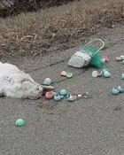 easter is over.jpg