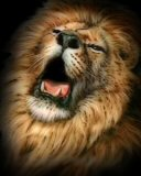 Free Lion King.jpg phone wallpaper by zestyred