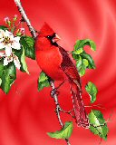 Free The Cardinal.jpg phone wallpaper by zestyred
