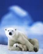 Polars.jpg