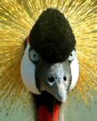 Funny Looking Bird.jpg