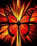 Free Butterfly Blast.jpg phone wallpaper by zestyred