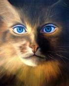 cat%20woman.jpg wallpaper 1