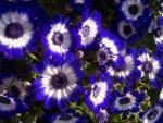 Free FANTASYblue-flowerst.jpg phone wallpaper by credulous2confute