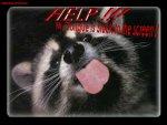 Free FANTASY9racoont.jpg phone wallpaper by credulous2confute