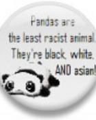 pandas wallpaper 1
