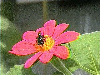 Free flower.JPG phone wallpaper by chriso