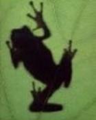 frog.jpg wallpaper 1