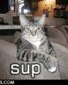 lol cat.jpg