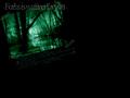 Free Twilight-Wallpaper-twilight-series-533650_120_90.jpg phone wallpaper by credulous2confute