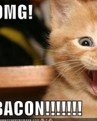 funny-pictures-kitten-is-excited-about-bacon.jpg
