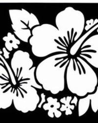 hibiscus-flower-schwarz_weiss.jpg