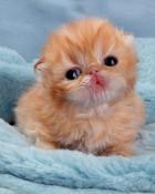little_kittens.jpg