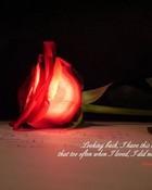 Love n Rose