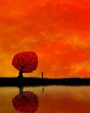 Free Orange.jpg phone wallpaper by chelcee7