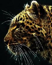 Free Cheetah.jpg phone wallpaper by chelcee7