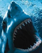 Free Shark.jpg phone wallpaper by chelcee7