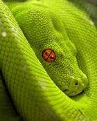 Snake Eye.jpg