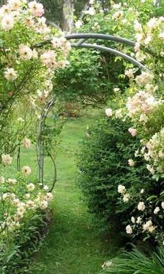 Free rose-garden-arch.jpg phone wallpaper by debblesrn