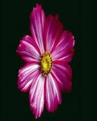 Pink&purple flower.jpg