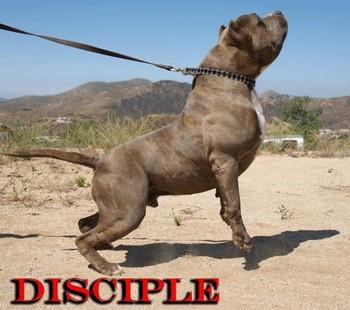 Free disciple4.jpg phone wallpaper by jgarcia1024