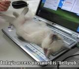 Free kitten.jpg phone wallpaper by honeygirl96