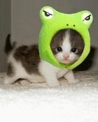 cat-frog-hat