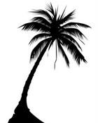 ist2_4392120-palm-tree.jpg