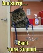 funny-pictures-cat-says-your-disease-is-incurable_normal.jpg