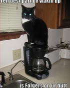 funny-pictures-cat-sits-on-your-coffee.jpg