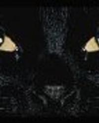 blackcat wallpaper 1