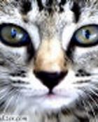 kitten001