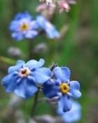 alaska flowers.jpg