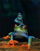 1155-3004~Frogs-Posters.jpg