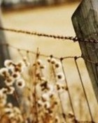 Country Fence wallpaper 1