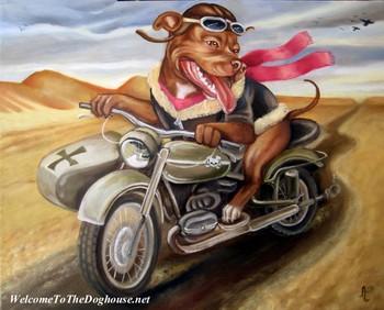 Free pitbull-motorcycle.jpg phone wallpaper by benboyfly